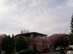 chiesa lesionata medolla